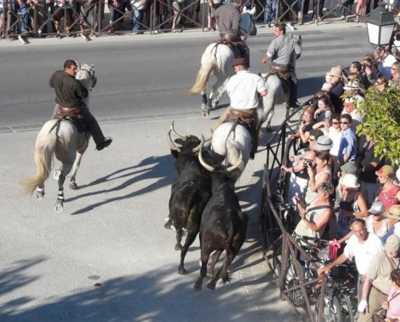 http://chevauxdegardian.cowblog.fr/images/BANDI1.jpg