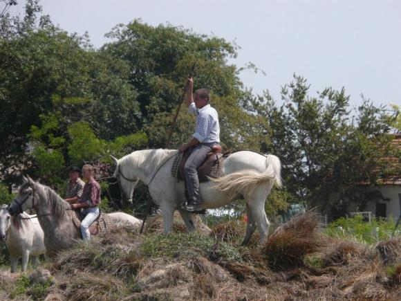 http://chevauxdegardian.cowblog.fr/images/CHEVALDEGARDIAN.jpg