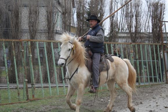http://chevauxdegardian.cowblog.fr/images/monsieurbriaux.jpg